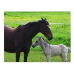 Cute Horses  Postcard