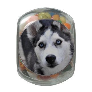 Cute Husky Glass Jars