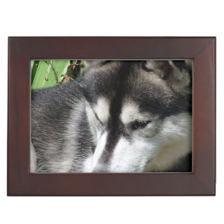 Cute Husky Keepsake Box