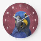 Cute Hyacinth Macaw Close-Up Large Clock