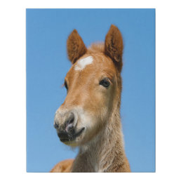 Cute Icelandic Horse Foal Pony Head Front Photo .. Faux Canvas Print