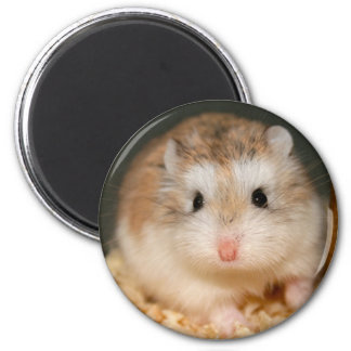 Cute Ickle Magnet