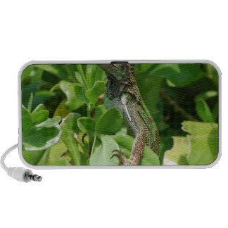 Cute Iguana in a Bush Speaker System