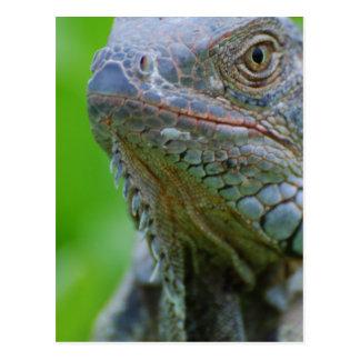 Cute Iguana Postcard