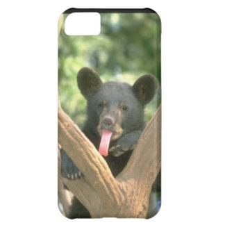 Cute iPhone 5 Cases Beautiful Baby Bear