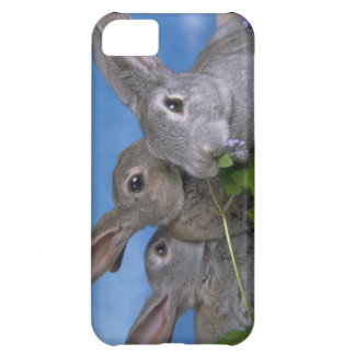 Cute iPhone 5 Cases Beautiful Baby Rabbits