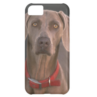 Cute iPhone 5 Cases Beautiful  Dog