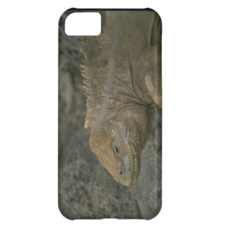 Cute iPhone 5 Cases Beautiful Dragon Repltile
