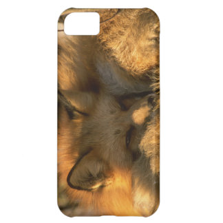 Cute iPhone 5 Cases Beautiful Fox