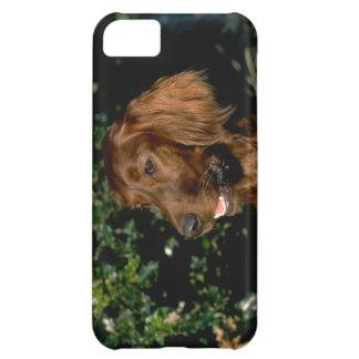 Cute iPhone 5 Cases Beautiful Irish Setter Dog