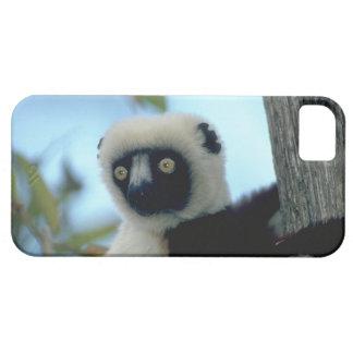 Cute iPhone 5 Cases Beautiful Lemur
