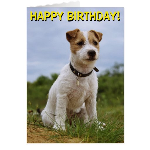 Cute Jack Russell Birthday Card