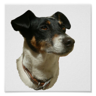 Cute Jack Russell Dog Print