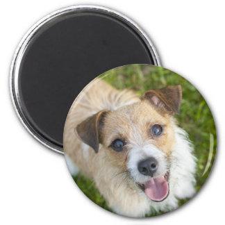 Cute Jack Russell terrier dog photo fridge magnet