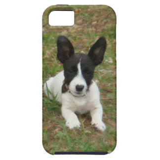 Cute Jack Russell Terrier Puppy iPhone 5 case