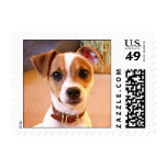 Cute Jack Russell Terrier puppy postage stamps