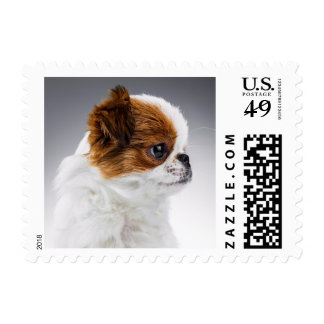 Cute Japanese Chin Puppy Postage Stamp