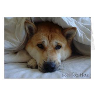 Cute japaneses akita under bed blankets card