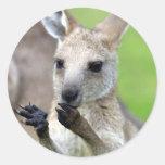 Cute joey kangaroo stickers