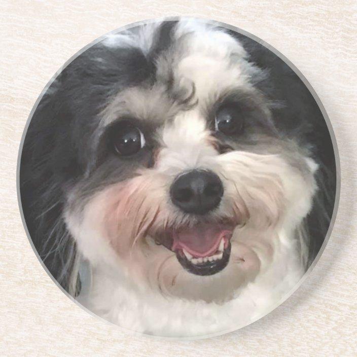 Little dog 2 coaster