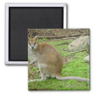 Cute Kangaroo At Perth Zoo. Fridge Magnets