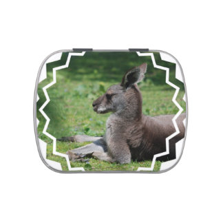 Cute Kangaroo Jelly Belly Candy Tins