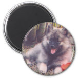 Cute Keeshond Puppy 2 Inch Round Magnet