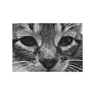 Cute Kitten 24x16 Canvas Print