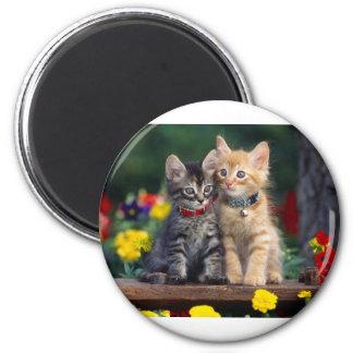 Cute-Kitten 2 Inch Round Magnet