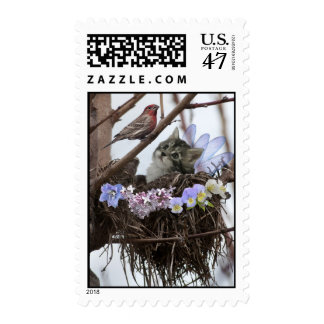 Cute kitten and bird in nest postage