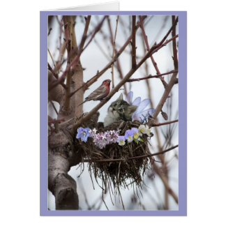 Cute kitten and bird nest Easter or Spring Greeting Card
