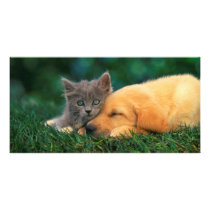Cute Kitten and Puppy together Card