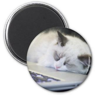 Cute Kitten Asleep 2 Inch Round Magnet