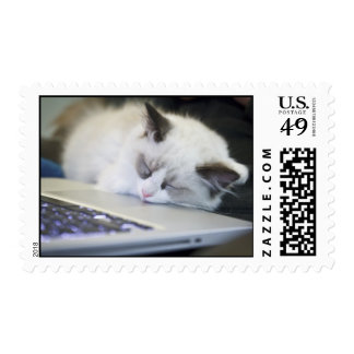 Cute Kitten Asleep on a Laptop Postage