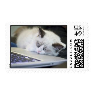 Cute Kitten Asleep on a Laptop Stamps
