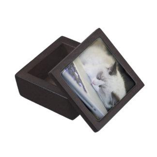 Cute Kitten Asleep on a Laptop Premium Jewelry Box