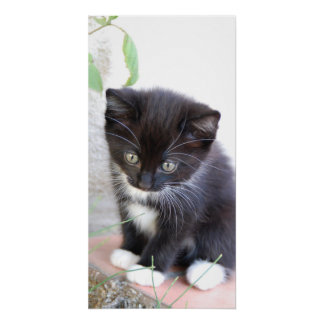 Cute Kitten Black White Cat Pet Purr Meow Kitty Poster