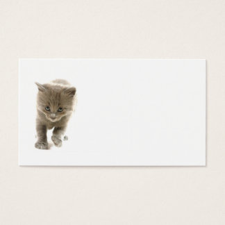 cute kitten business card