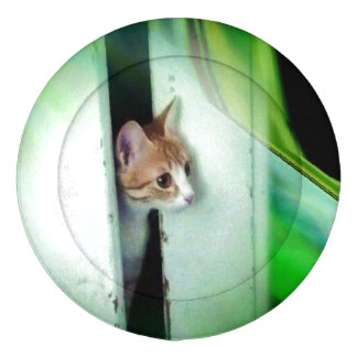 Cute Kitten Button Covers Pack Of Large Button Covers
