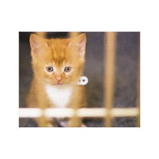 Cute Kitten Canvas Prints