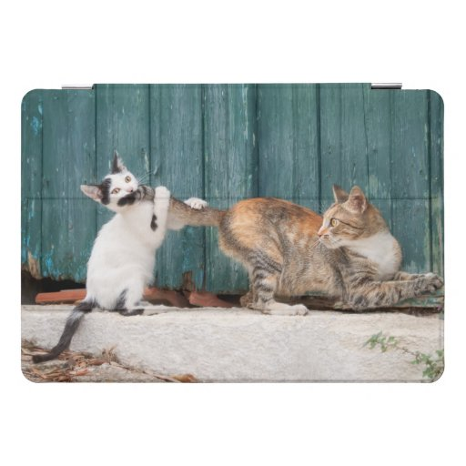 Cute Kitten Chasing Mom's Tail Funny Cat Photo - iPad Pro Cover