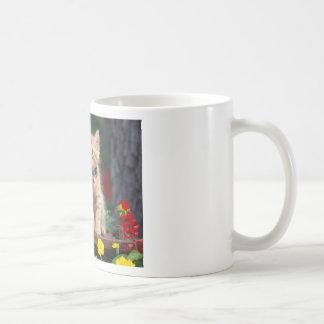 Cute-Kitten Coffee Mug