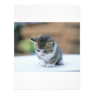 Cute Kitten Flyer