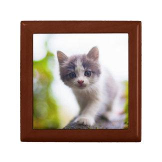 Cute Kitten Jewelry Boxes