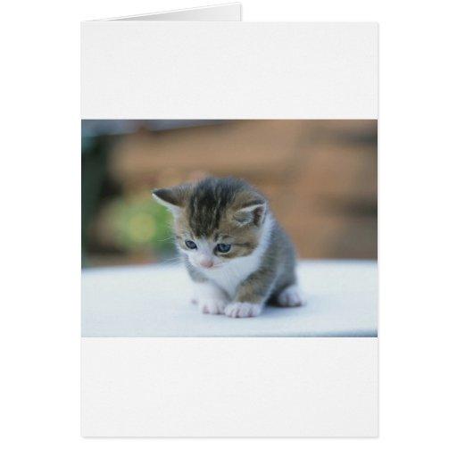 Cute Kitten Greeting Card