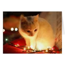 Cute Kitten Holiday Greeting Card