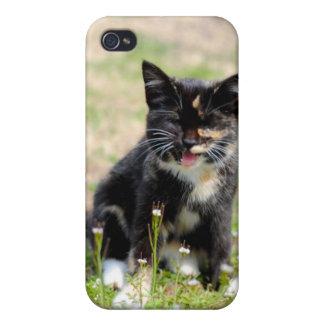 Cute Kitten I iPhone 4 Covers