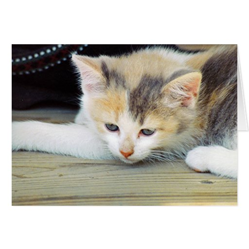 Cute Kitten Laying On Floor With Sad Face Greeting Cards