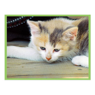 Cute Kitten Laying On Floor With Sad Face Postcard