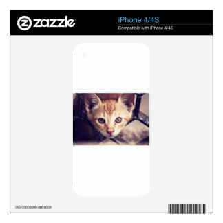 Cute Kitten looking at YOU Decal For The iPhone 4